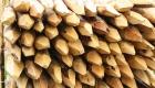 piquet-rennes